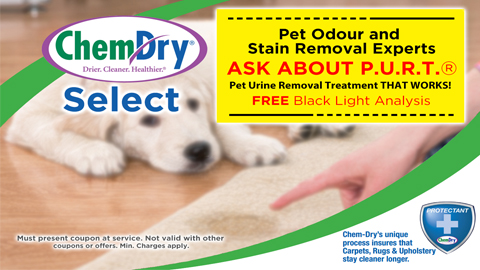 Pet Odour and Stain Removal Experts